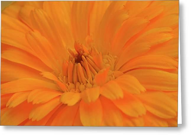 Sunny Calendula Greeting Card by Maria Suhr