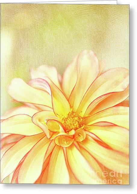 Sunny Dahlia Greeting Card by Beve Brown-Clark Photography