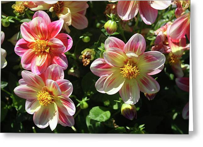 Sunny Day Greeting Card by Bruce