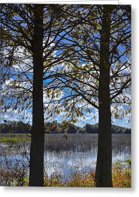 Sunny Day On The Pond Greeting Card by Carolyn Marshall