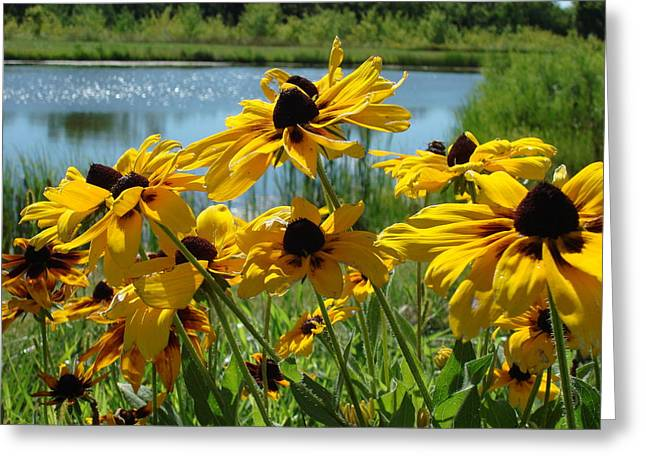 Sunny Days Greeting Card