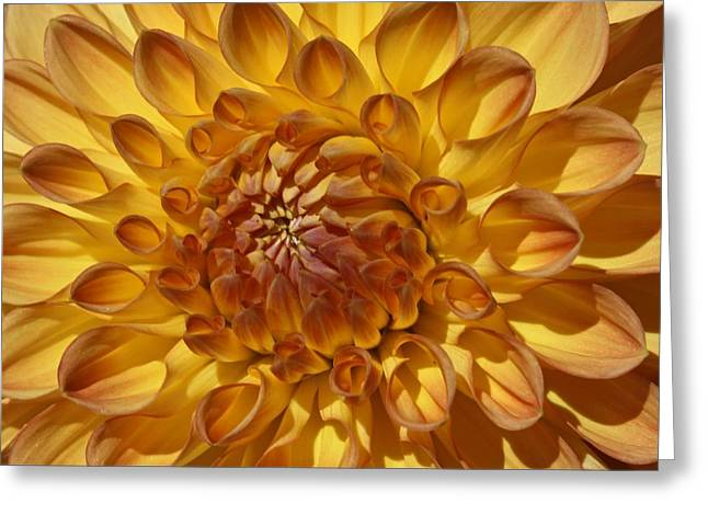 Sunny Delight Greeting Card by Monnie Ryan
