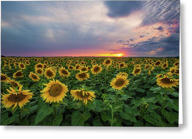 Sunny Disposition  Greeting Card by Aaron J Groen