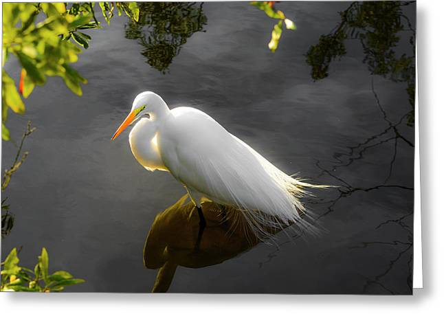 Sunny Egret Greeting Card
