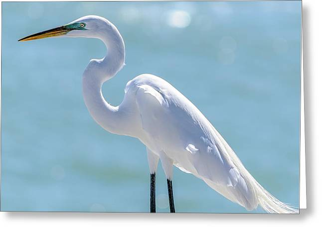 Greeting Card featuring the photograph Sunny Egret by Steven Sparks