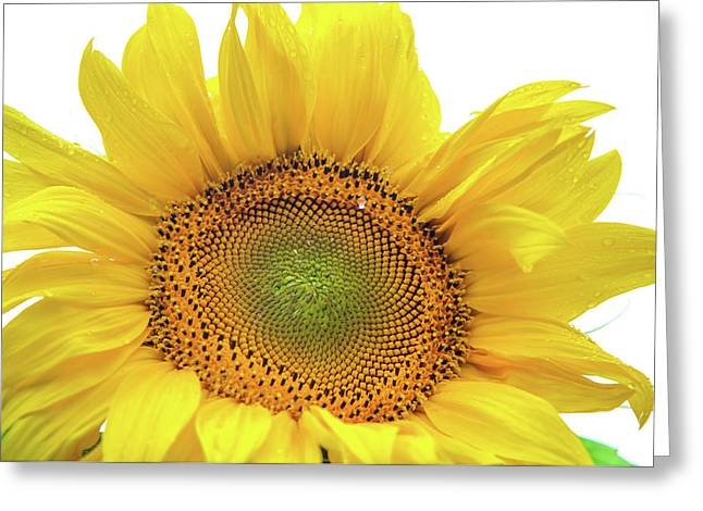 Greeting Card featuring the photograph Sunny Flower 1 by Jenny Rainbow
