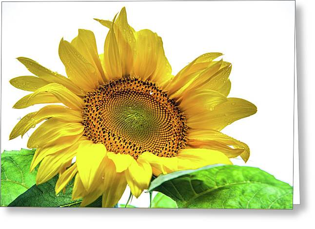 Greeting Card featuring the photograph Sunny Flower by Jenny Rainbow