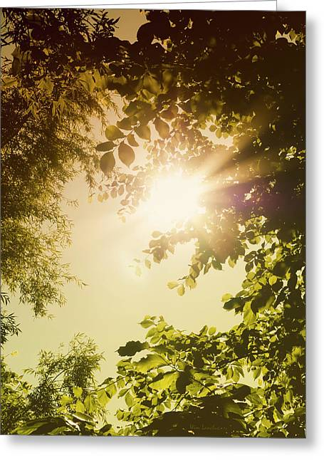 Sunny Forest Greeting Card