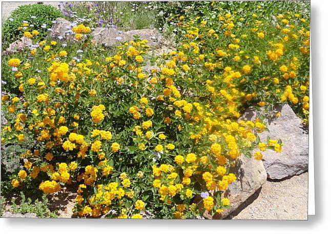 Sunny Garden Greeting Card