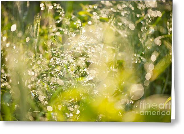 Sunny Grass After The Rain Greeting Card by Arletta Cwalina