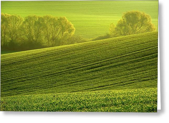 Sunny Green Greeting Card by Jenny Rainbow