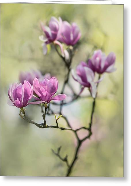 Sunny Impression With Pink Magnolias Greeting Card