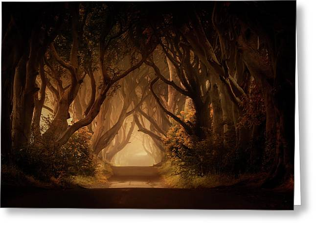 Sunny Morning In Dark Hedges Greeting Card