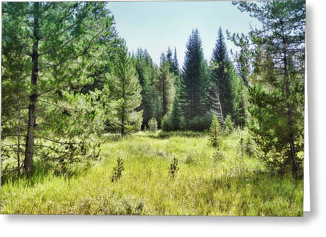 Sunny Mountain Meadow - Landscape Photograph Greeting Card by Ann Powell