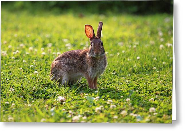 Sunny Bunny Greeting Card by Brian Manfra
