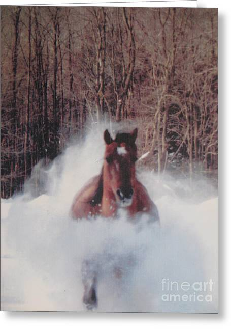 Sunny Running For The Barn. Greeting Card by Jeffrey Koss