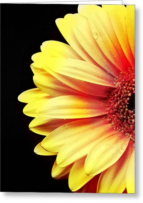 Sunny Side Over Easy Greeting Card by Diana Angstadt