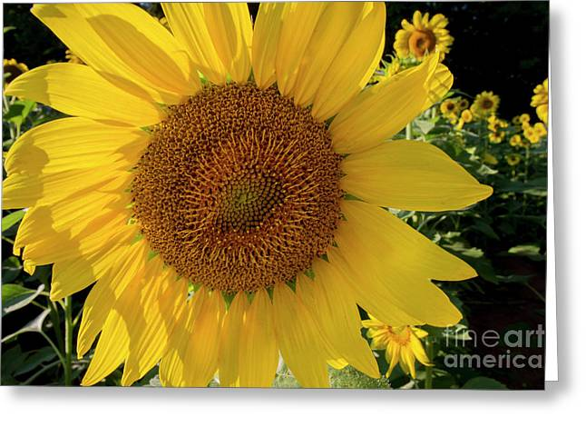 Greeting Card featuring the photograph Sunny Side Up by Chris Scroggins