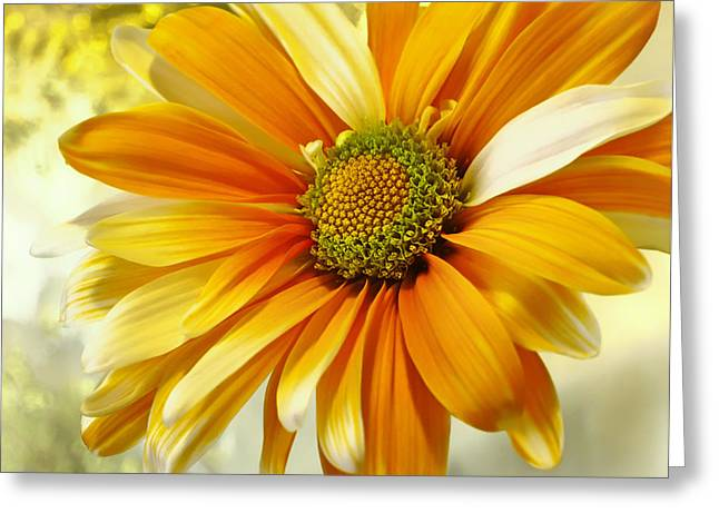 Sunny Side Up Greeting Card by Darlene Kwiatkowski