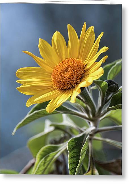 Greeting Card featuring the photograph Sunny Side Up  by Saija Lehtonen