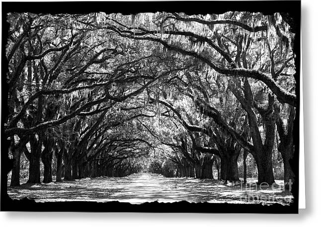 Sunny Southern Day - Black And White With Black Border Greeting Card by Carol Groenen