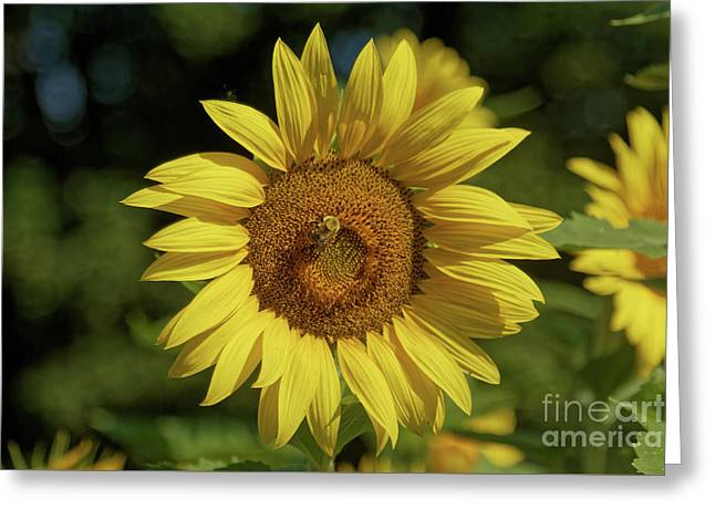 Sunny Sunflower And Friend Greeting Card
