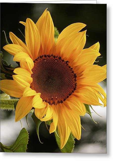 Greeting Card featuring the photograph Sunny Sunflower by Jordan Blackstone