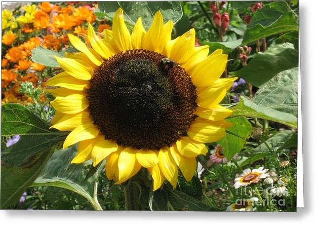 Sunny Sunflower With Bee Amid Flower Patch Greeting Card