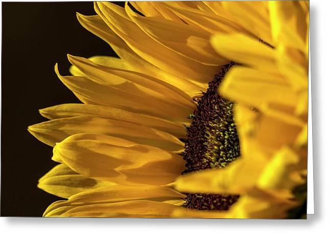 Greeting Card featuring the photograph Sunny Too By Mike-hope by Michael Hope