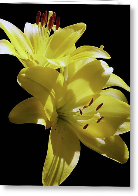 Sunny Yellow Lilies Greeting Card