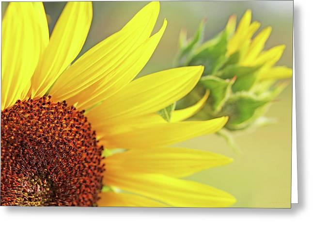 Sunny Yellow Sunflower Greeting Card