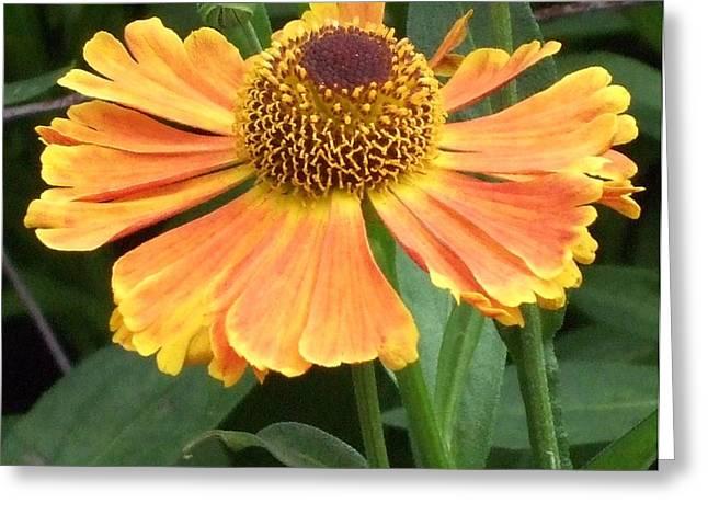 Sunnyside Up Greeting Card by Deborah Brewer