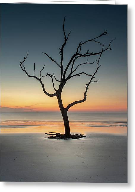 Sunrise And A Driftwood Tree Greeting Card
