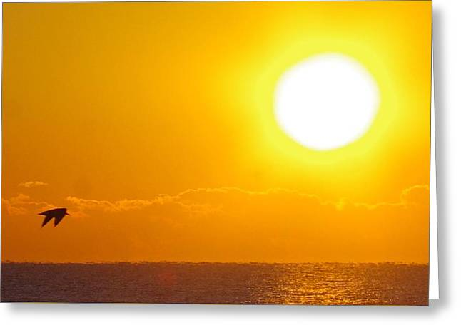 Sunrise And Bird Greeting Card