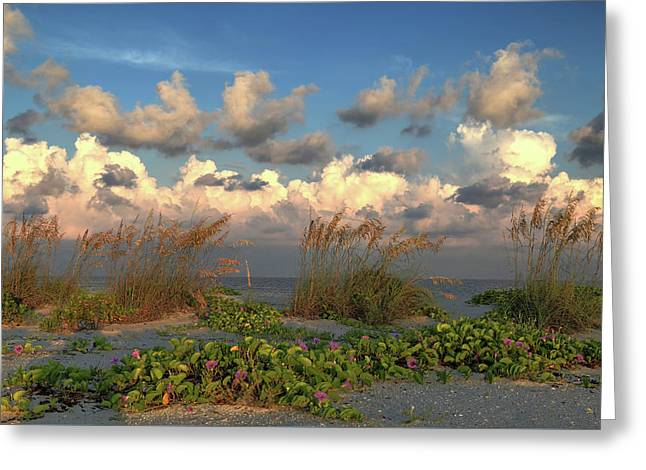 Greeting Card featuring the photograph Sunrise And Sea Oats by Donna Kennedy