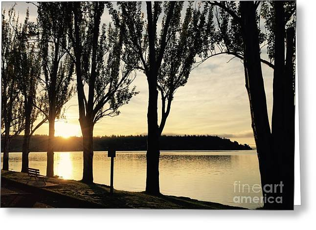 Sunrise And Silhouettes  Greeting Card