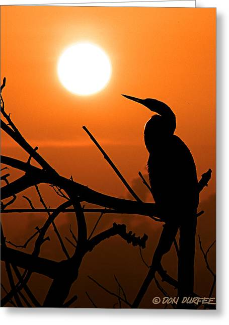 Greeting Card featuring the photograph Sunrise Anhinga by Don Durfee