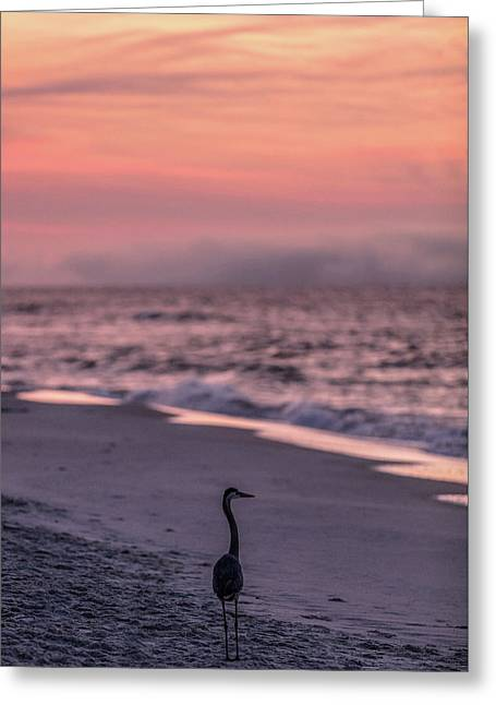 Greeting Card featuring the photograph Sunrise Beach And Bird by John McGraw