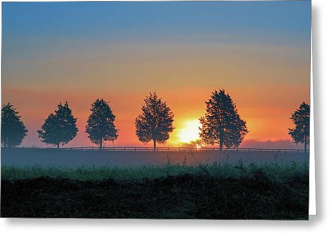 Greeting Card featuring the photograph Sunrise Behind The Cedars by Lori Coleman