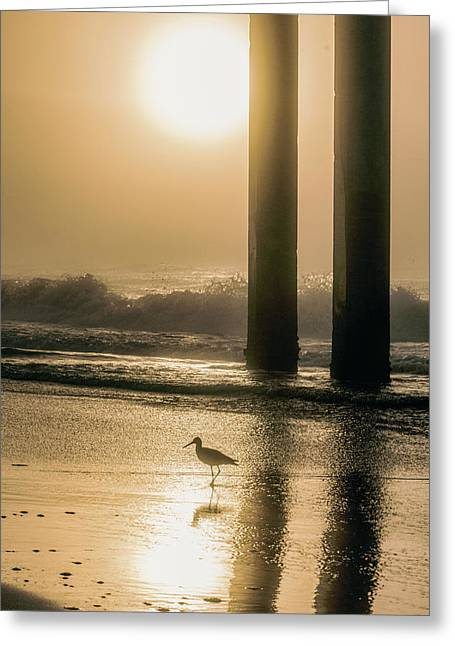 Greeting Card featuring the photograph Sunrise Bird At Beach  by John McGraw