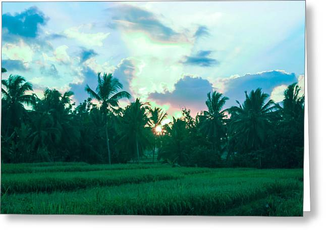 Sunrise Breaking Over Rice Greeting Card by Caroline Benson