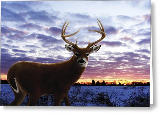 Sunrise Buck Greeting Card by Barbara Hymer