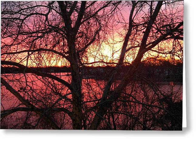 Sunrise Greeting Card by Cassandra Donnelly