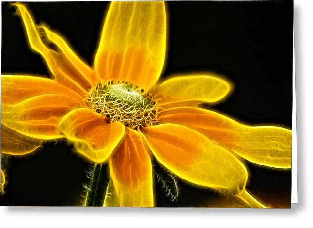Sunrise Daisy Greeting Card by Cameron Wood