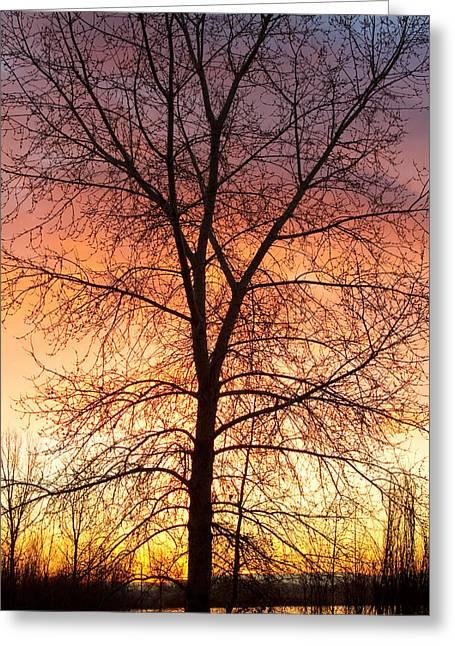 Sunrise December 16th 2010 Greeting Card