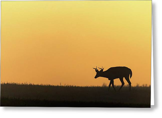 Sunrise Deer Greeting Card by Bill Wakeley