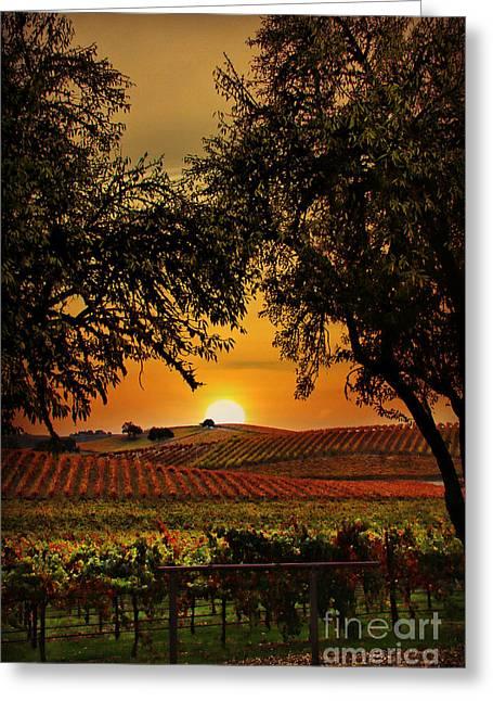 Sunrise Fall Vineyard Greeting Card by Stephanie Laird
