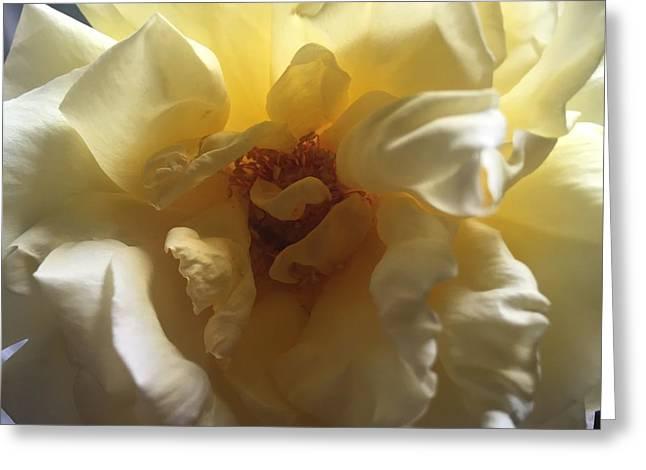 Sunrise Flower Greeting Card