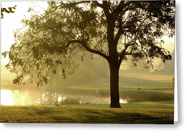 Sunrise Fog Greeting Card by Bill Caldwell