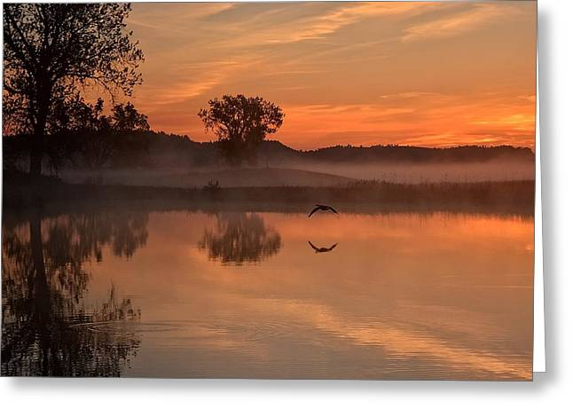 Sunrise Goose Greeting Card
